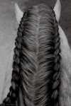 Stylish horses hairstyles