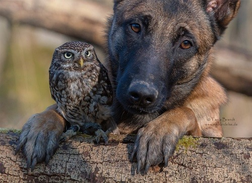 Ingo and Poldi friends forever. Wildlife photographer Tanja Brandt