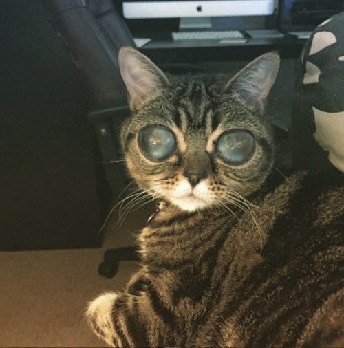 The cat has problems with vision