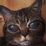 Alien Cat Matilda