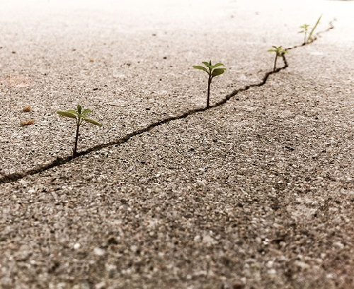 Plants that never give up
