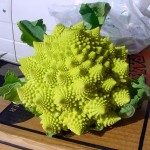 Romanesco cabbage, or Romanesque cauliflower looks like an alien, close relative of cauliflower and broccoli