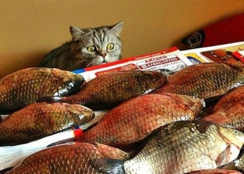 Too much fish for one cat