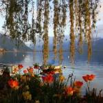 Turquoise mirror of the Swiss Alps Lake Geneva