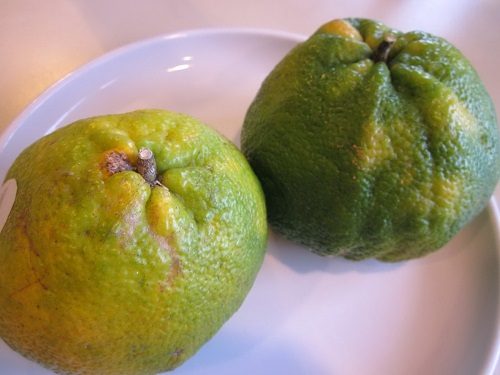 Uglifrut (Ugli) – a hybrid of grapefruit, orange and tangerine