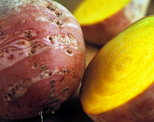 Yellow beetroot 'Burpees Golden'