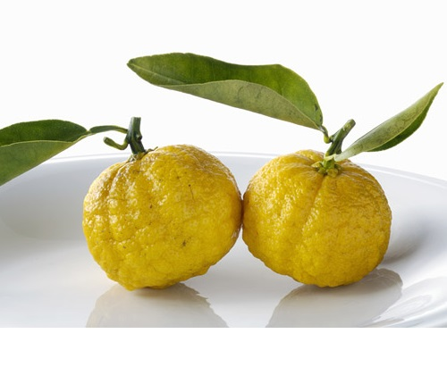 Yuzu, Japanese lemon