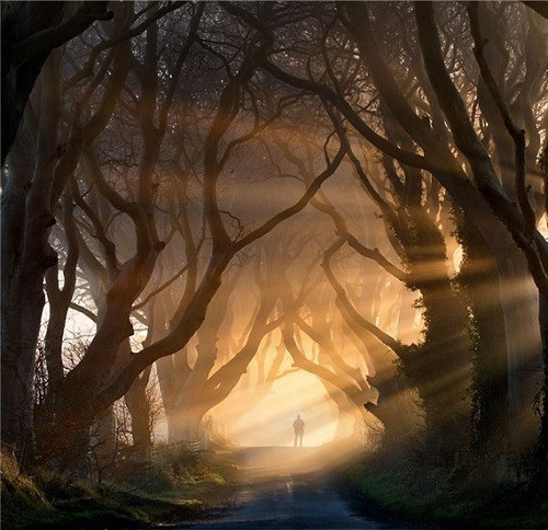 Beech Alley Dark Hedges, Northern Ireland