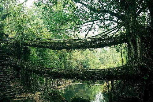 The 'double decker' living tree root bridge in the village of Nongriat in Meghalaya, IndiaMeghalaya-India