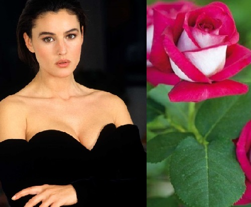 Flowers named after most beautiful women