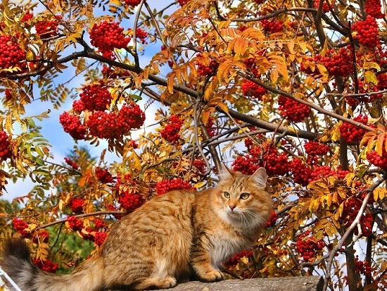 Photo – red cat under red rowan