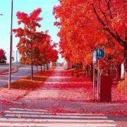 Red Autumn, Stockholm, Sweden