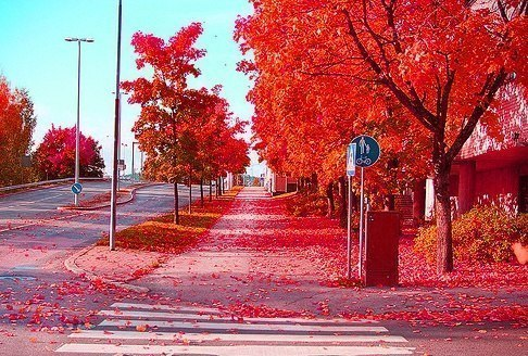 Red Autumn, Stockholm, Sweden