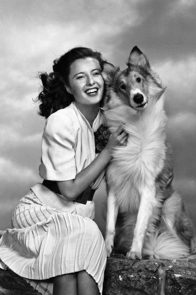 Stanwyck and the world-famous Lassie, 1944