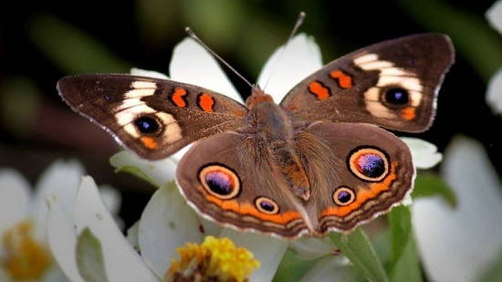 Stunning brown butterfly